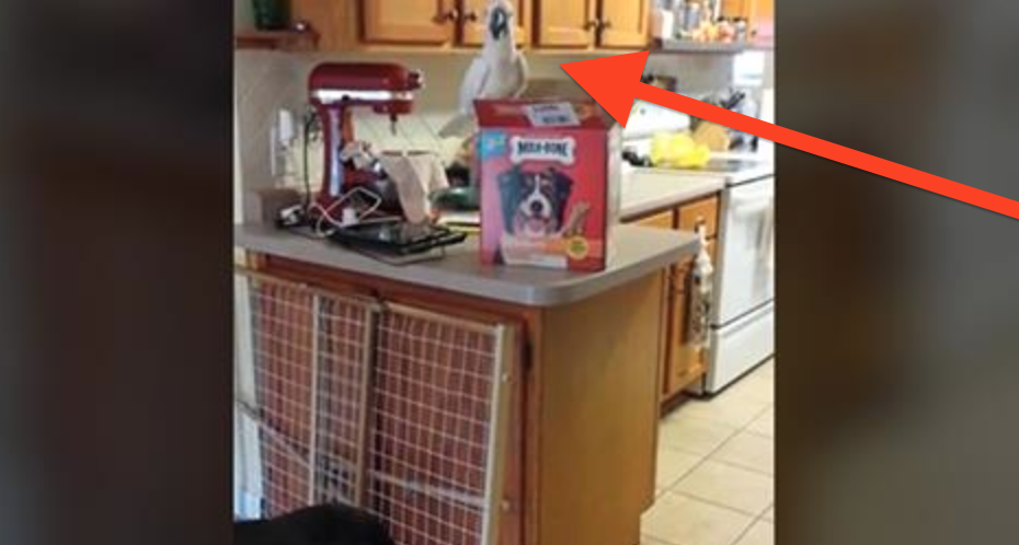 This Cute Cockatoo Scores Treats For Dogs When No One's Looking…You Won't Believe This!