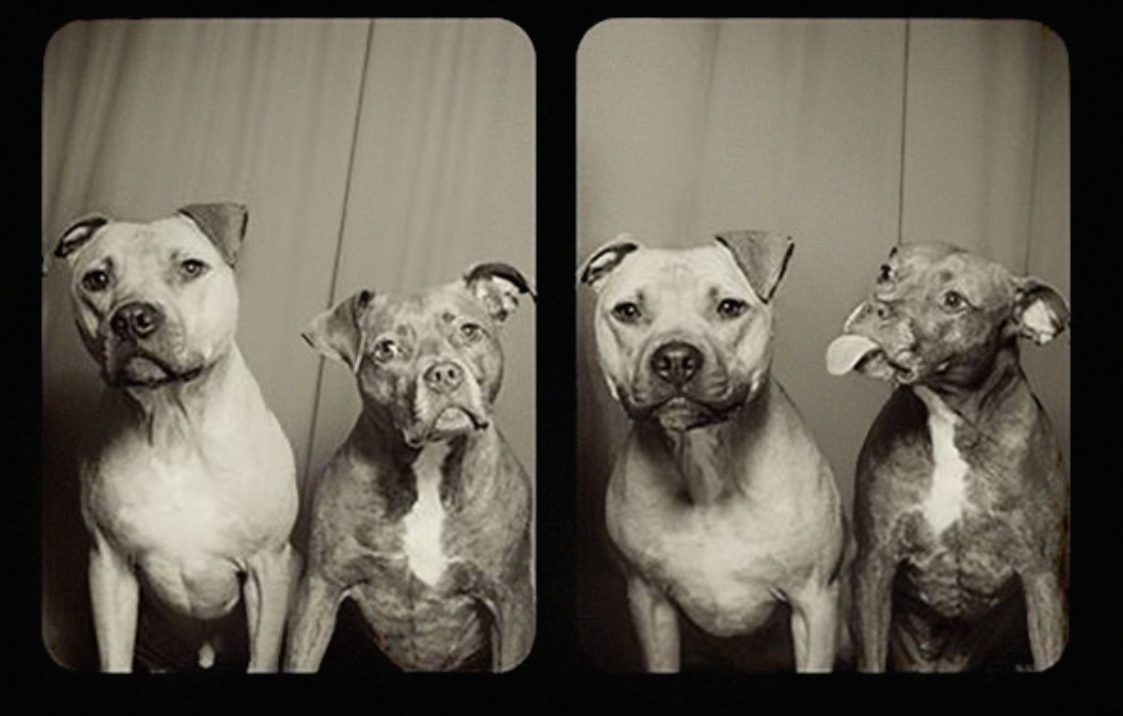 "This Woman Had The Idea Of Putting Dogs Into A Photo Booth. What You See Next Will Make You Go ""AWWW""!"