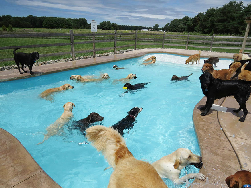 dog-pool-party-pawty