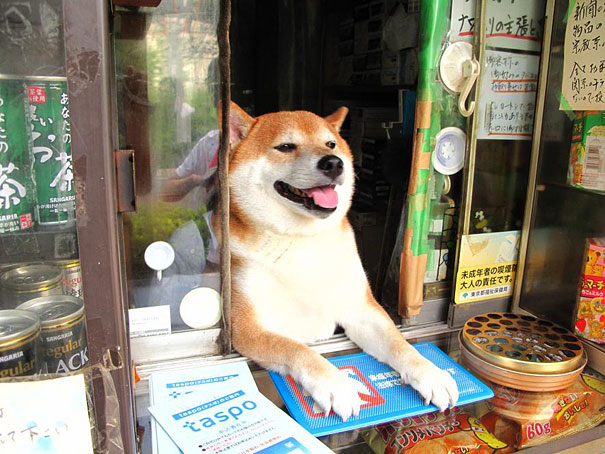 dog-welcoming-happy-store-shiba-inu-japan
