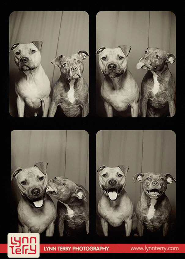 dogs-photo-booth1
