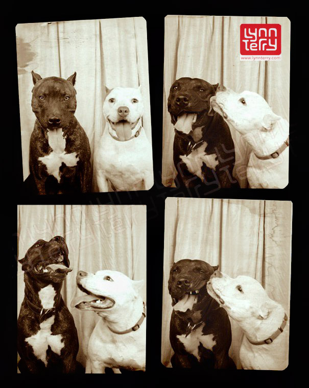 dogs-photo-booth2