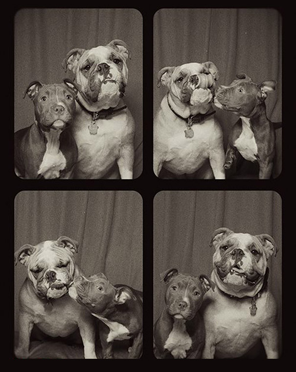 dogs-photo-booth3