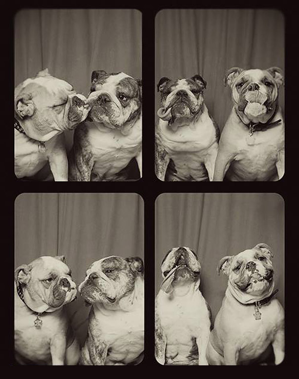 dogs-photo-booth4