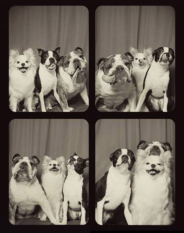 dogs-photo-booth5