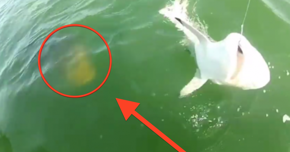 Everything You Thought About Sharks Being The Scariest Animal Of The Water Is WRONG. Wait till you see this!…