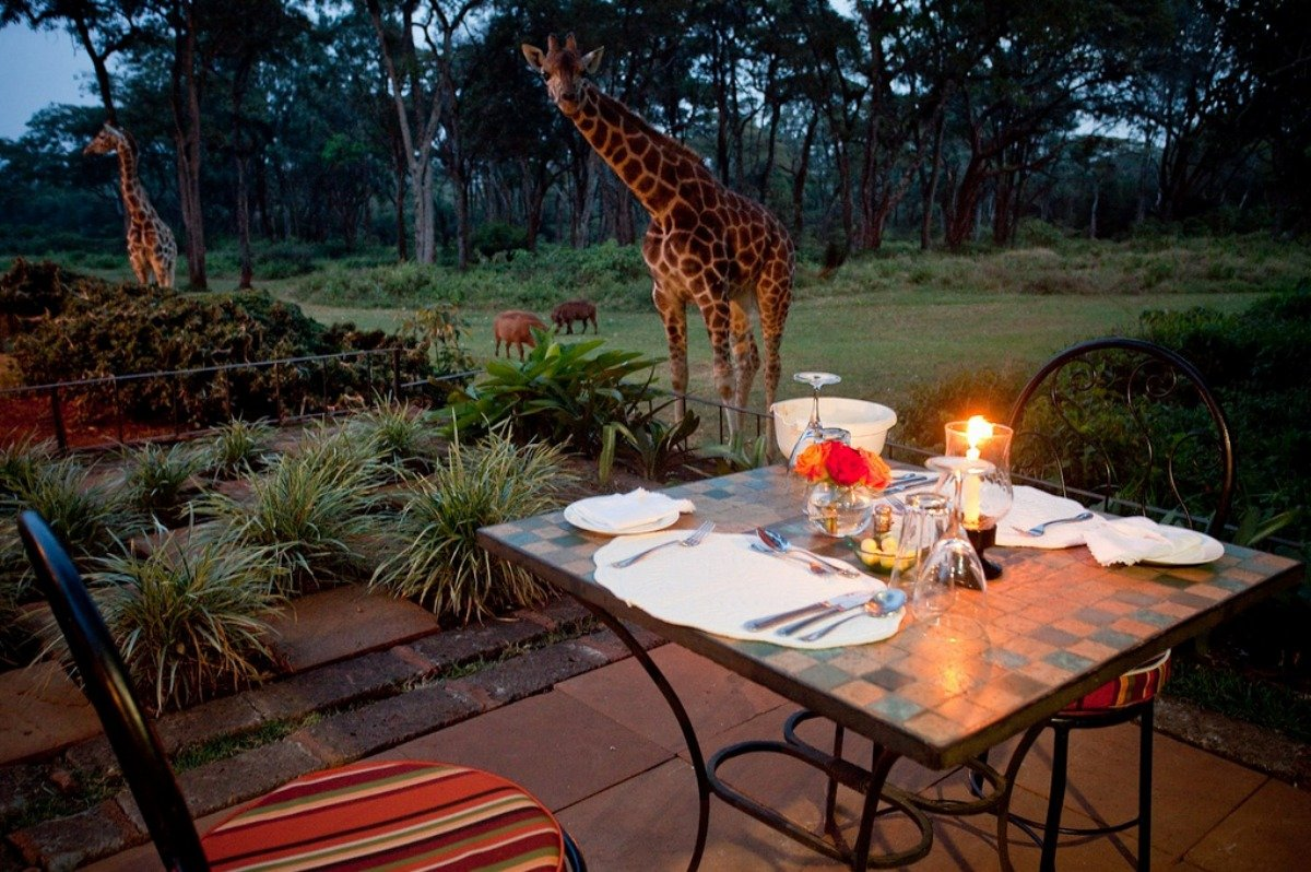 giraffe-eating-romantic-meal