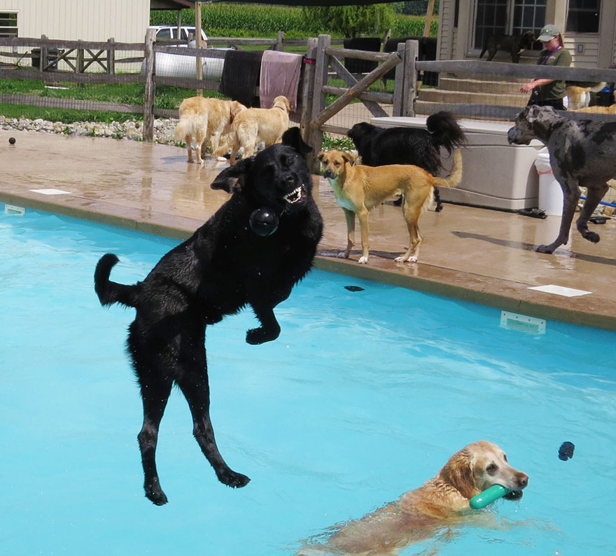 lucky-dog-pool-pawty-fun