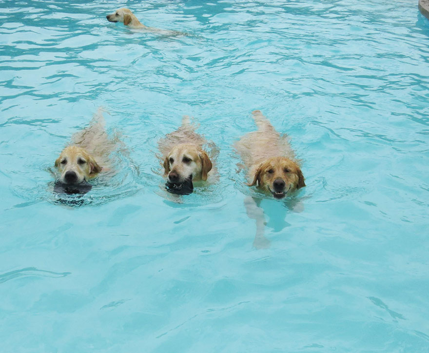 lucky-puppy-dog-pool-pawty