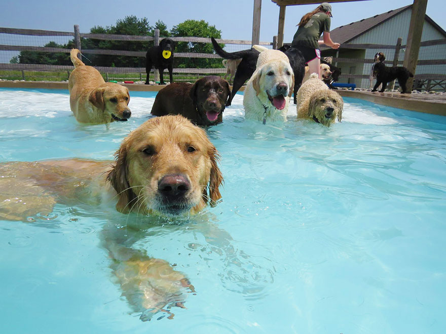 lucky-puppy-fun-pool-pawty