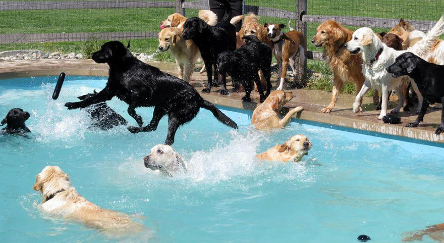 lucky-puppy-pool-pawty-dog
