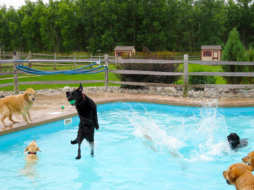 lucky-puppy-pool-pawty-dogcare