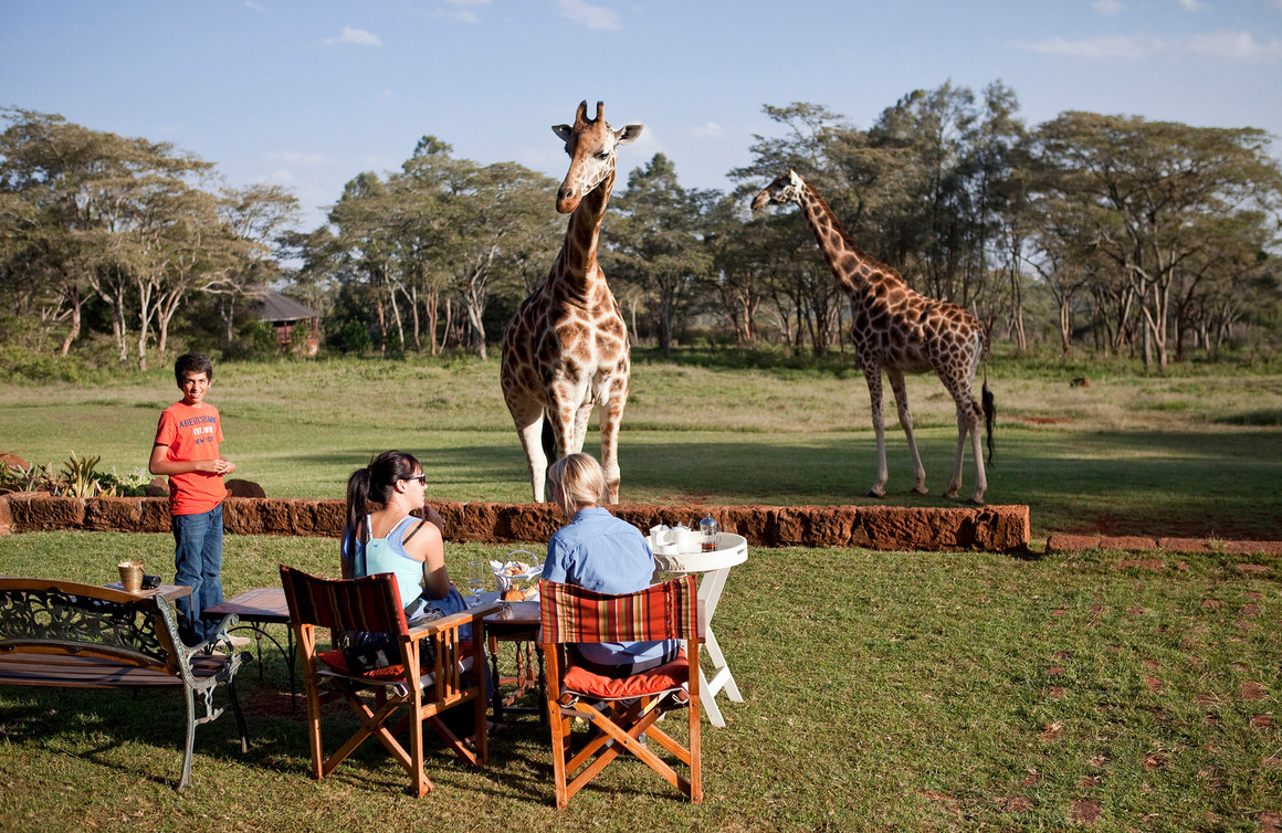 outside-view-giraffe-hotel