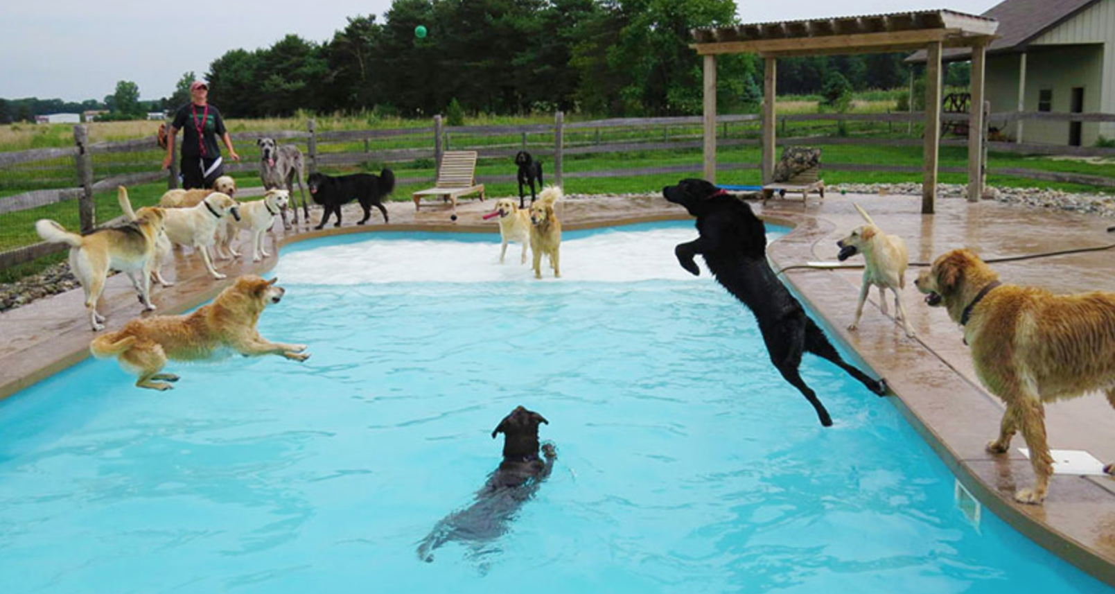 pool-pawty-doggie-daycare