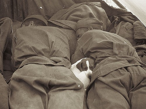 puppy-sleeping-russian-soldiers