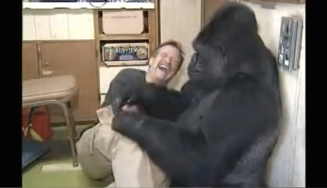 Robin Williams Met Koko The Gorilla. She Asked Him To Do Something You Would Never Expect…